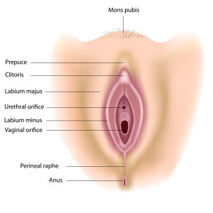 What shall female anatomy vulva thank for