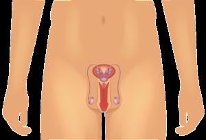 male-anatomy